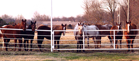 The horses of Diamond Run Farm